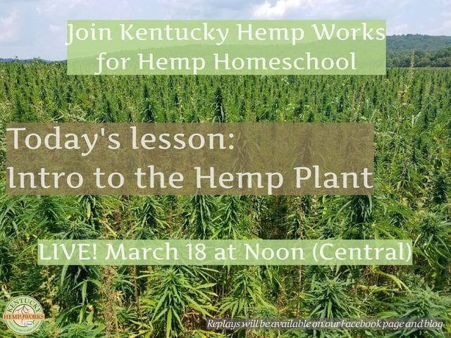 Hemp Homeschool - Intro to the hemp plant