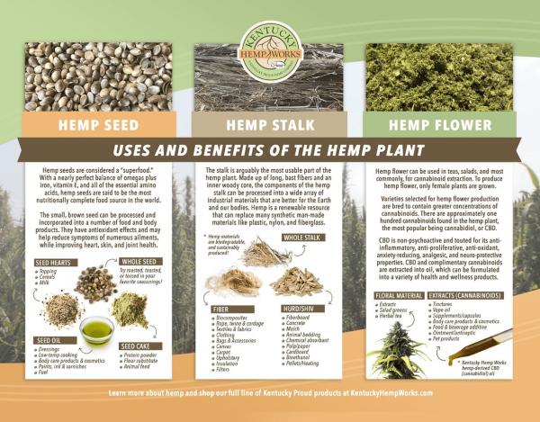 Benefits Hemp Plant Brochure Back